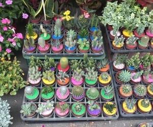 cactus, taiwan, and travel image