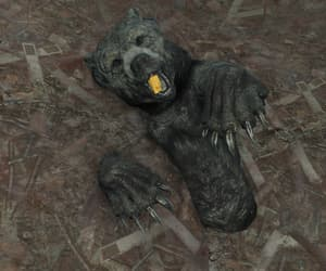 bear, buried, and claws image