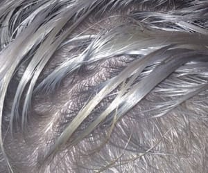 aesthetic, grey, and hair image