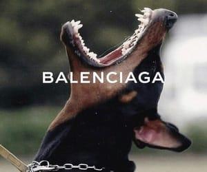 aesthetic, dog, and Balenciaga image