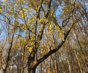 autumn, beautiful, and dreamer image