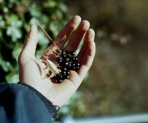 berries, light, and hand image