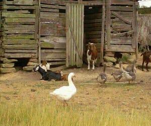 animals, cottage, and goat image