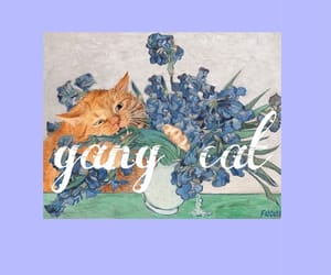 cat and gang cat image