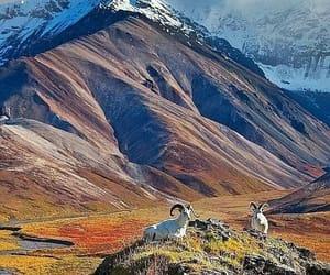 Animales, montaña, and belleza image