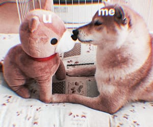 dog, shiba inu, and wholesome image