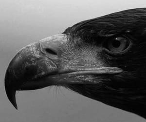 raptor and eagle eye image
