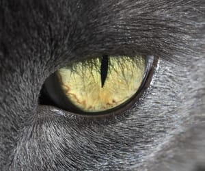 animals, cats, and eyes image