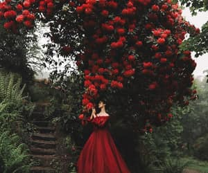 photography, red, and beauty image