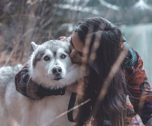 animal, dog, and eyes image