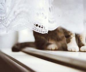 cat, vintage, and pinterest image