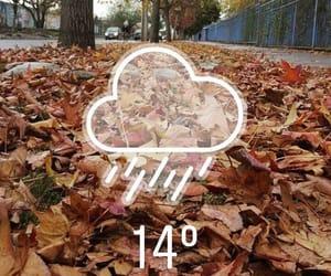 hojas, otoño, and viento image