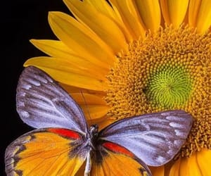 butterfly, colores, and flowers image