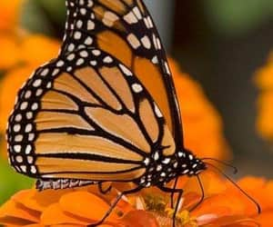 butterfly, colores, and naturaleza image
