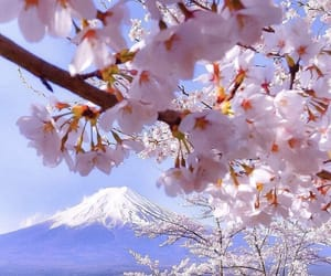 flowers, cherry blossom, and mountain image