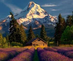 belleza, naturaleza, and exteriores image