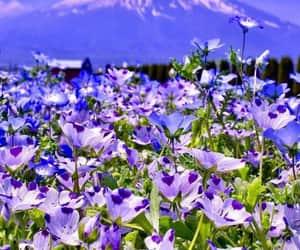 belleza, colores, and naturaleza image