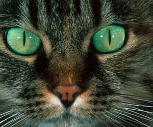Animales, cat, and fotografía image