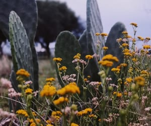 cactus, floral, and flowers image