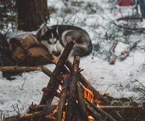 sled dog, outdoor fireplace, and after the snow image
