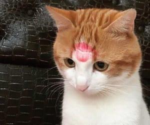 animals, kitten, and cat image