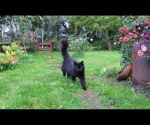 black cat, garden, and cute image