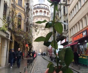 rose, istanbul, and couple image