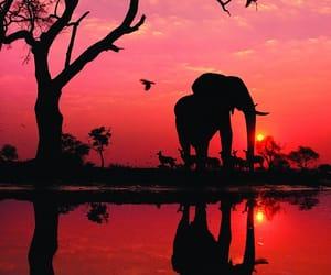 elephant, sunset, and nature image