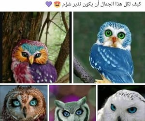 arabic words, صباح الخير, and ﺭﻣﺰﻳﺎﺕ image