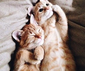 animal and cat image