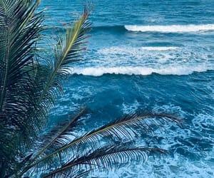 agua, plantas, and playa image