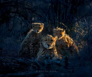 art, wildlife photography, and wildlife photography cubs image