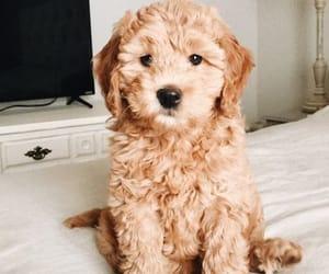 Animales, animals, and dog image