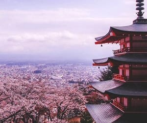 japan, flowers, and travel image