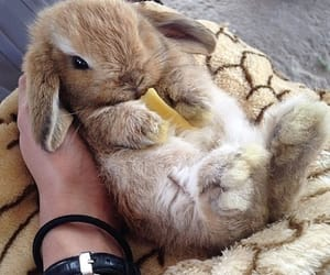 bunny, lovely, and rabbit image