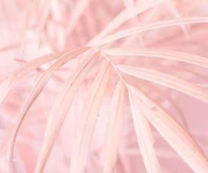 blur, landscape, and up close image