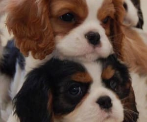 animal, puppies, and cute image