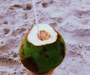 beach, coconut, and coconut water image