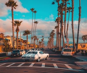 beach, palm trees, and cars image