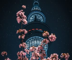 aesthetic, city, and cherry blossom image
