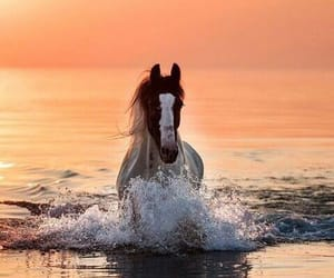 horse, animals, and sunset image