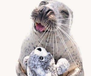 adorable, cuddle, and seal image