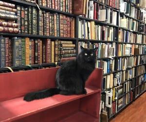 black cat, books, and bookshop image