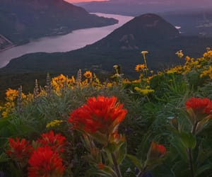 flowers, landscape, and mountains image