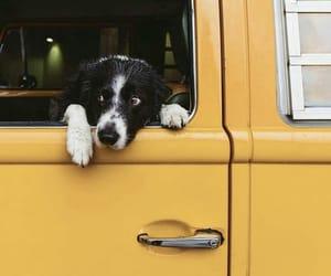dog, yellow, and aesthetic image
