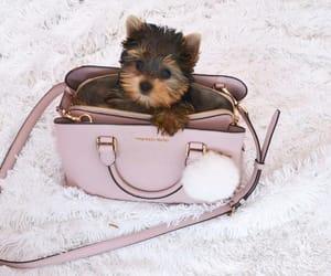 dog, cute, and Michael Kors image