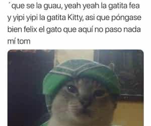 gangsta, gatito, and gato image