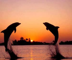animal, dolphin, and sunset image