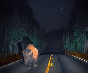 bison, highway, and nature image