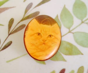 pin, pins, and tabby cat image
